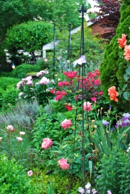 A profusion of bloom