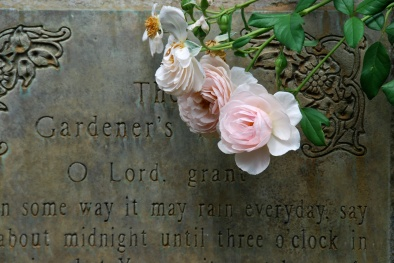 The Gardener's Prayer with Heritage Rose