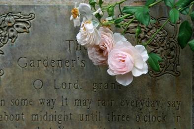 The Gardener's Prayer with Heritage Rose