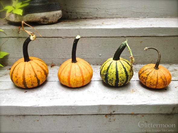 4 Little 'Gumpkins' All in a Row