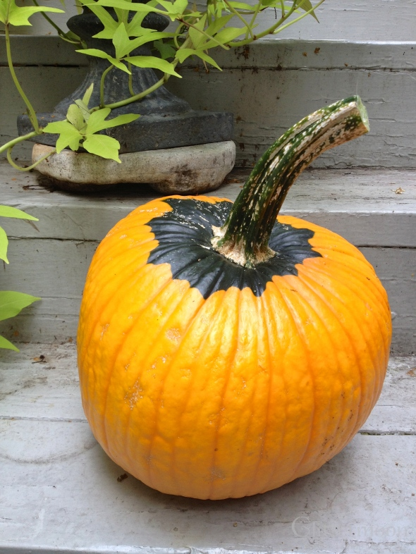 The Big 'Gumpkin'