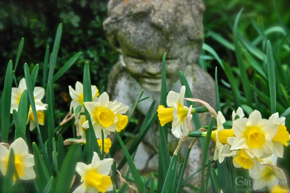 Little Happy with Daffodils