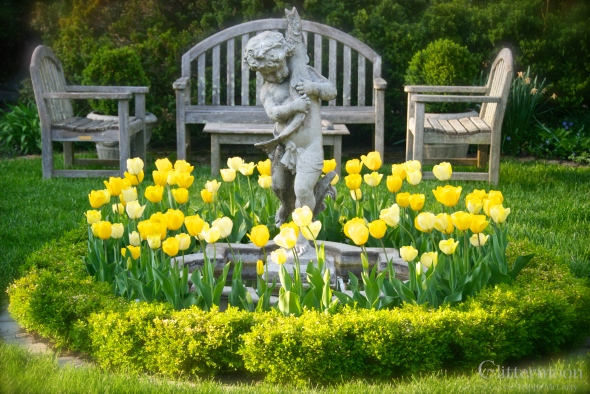 Vinnie Amongst the Tulips